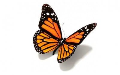 Transformation ou réinvention